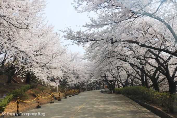 지역민과화합의 장열다,SK인천석유화학 벚꽃축제 관련사진4