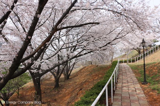 지역민과화합의 장열다,SK인천석유화학 벚꽃축제 관련사진5